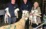 WATCH: Offaly's one-in-a-million lambs appear on RTE News
