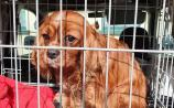 Gardaí in Midlands searching for the owners of stolen dogs and puppies recovered during search