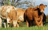 Beef farmers need to be supported not patronised - Nolan