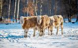 Offaly farmers re-house animals as weather deteriorates