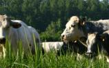 Offaly TD demands Fair Deal Scheme for farmers