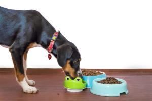 ALERT: Leading pet food brand issues product recall over fears that animals could become ill