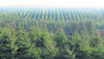"""Local group challenges licence to plant Sitka Spruce """"alien species"""" on Co Leitrim site"""