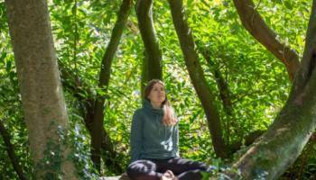 Japanese Forest Bathing in Offaly Castle
