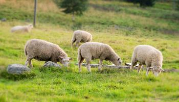 IFA call for immediate reopening of Organic Farm Scheme