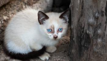 Cat kicked around Offaly garden in deeply disturbing incident