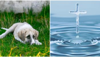 Offaly parish to host 'blessing of pets' event