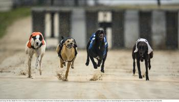 Former Offaly footballer turned greyhound trainer bags winner out west