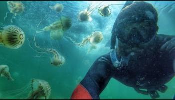 Jellyfish blook