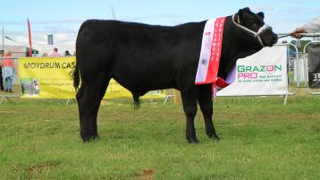 Tullamore Show crowns three prized bulls for national finals