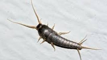 ALERT: Warning of serious increase in prehistoric insect in Irish homes