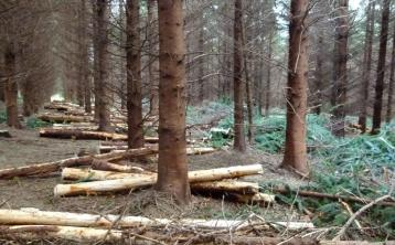 Jobs boost for Offaly as timber company relocates