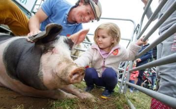 Pig classes cancelled at Tullamore Show amid Swine Flu fears