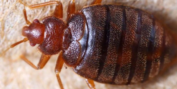 WARNING: returning holidaymakers urged to watch out for bed bugs